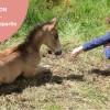 image_thumb_Les Murmures de Kerdroc'h - Equitation éthologique