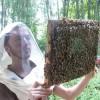 image_thumb_Un verger pour Cit'abeille
