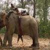 image_thumb_Aider un centre de soins vétérinaires pour les éléphants indiens, les rhinocéros unicornes et les ours asiatiques.