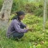 image_thumb_Sécuriser l'accès à l'eau pour les familles maraîchères à Bali - 6 impluviums