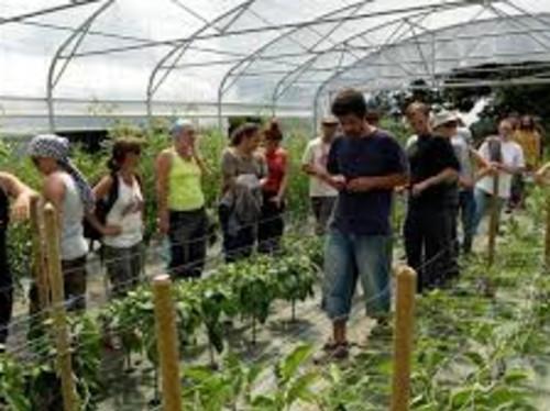Jardin Partagé : serre en permaculture