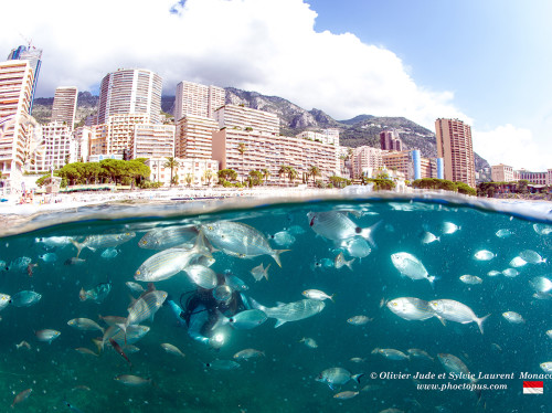 Monaco's Marine Protected Areas