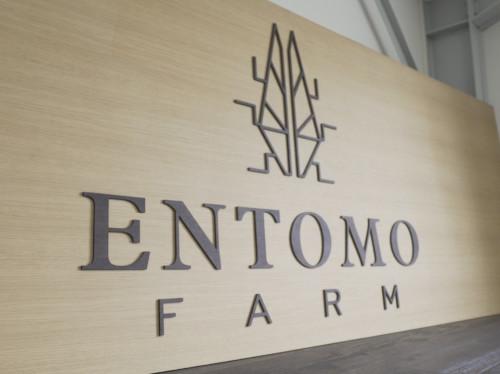 Entomo Farm, l'élevage d'insectes pour demain