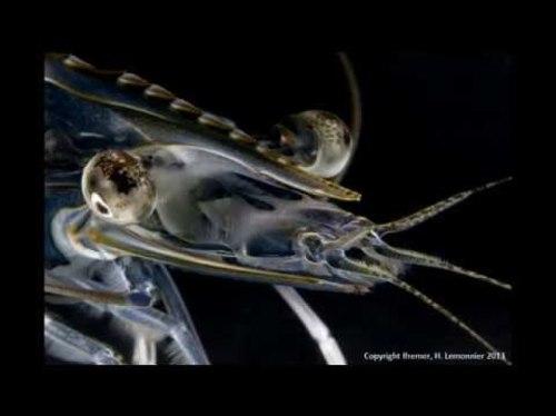 Valorisation de l'aquaculture locale en Polynésie française