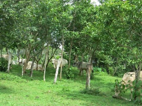 Le sylvo-pastoralisme en Uruguay, levier économique et écologique pour l'élevage extensif traditionnel