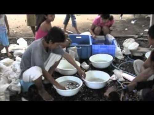 Pour la protection des fonds marins en Indonésie