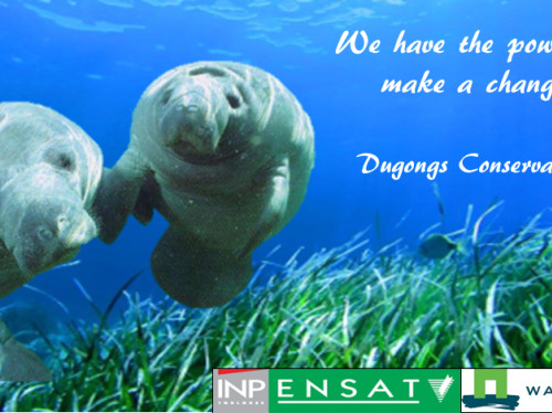 Save the Dugongs in Indonesia ! We have the power to make a change.