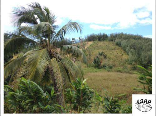 Plantation villageoise de Palmier à Huile certifiée biologique et durable à Madagascar