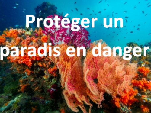 Corail et biodiversité marine