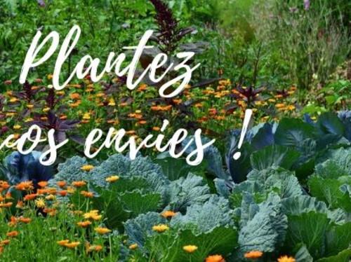 Bons plants pour les potagers!