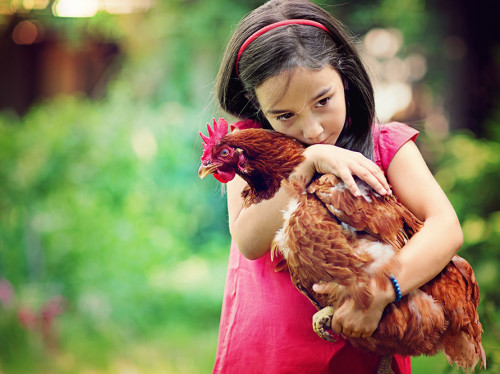 Des poules et des enfants - JCE CARCASSONNE