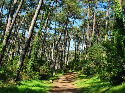 Reboisement de la forêt de Chiberta
