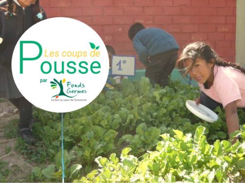 Organic vegetable gardens for children of Peru