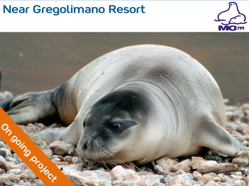 Protection of the monk seals in Greece