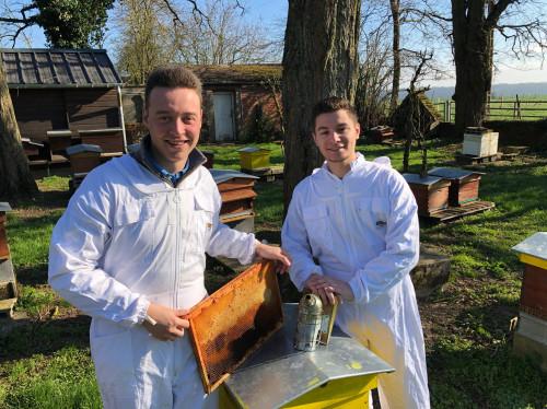Sauvegardons l'abeille noire des Hauts de France