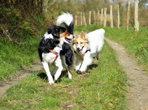Superdog, des activités qui ont du chien !