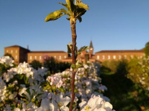 Notre-Dame des Dombes : Une abbaye Laudato Si