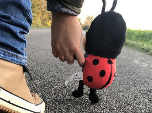 Deesje het Lieveheersbeestje