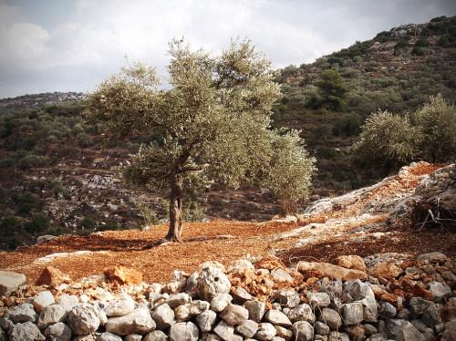 Enfance Palestine : apprendre le français au Patriarcat Latin