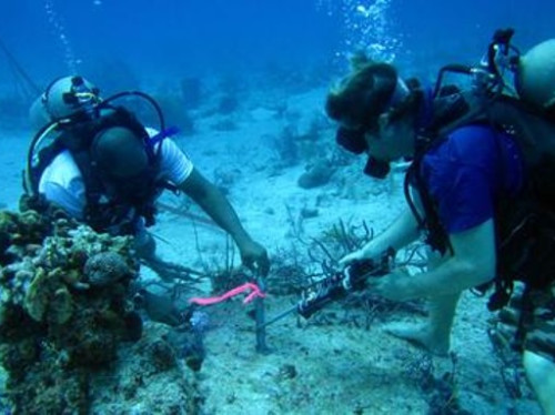 Turks and Caicos Reef Fund