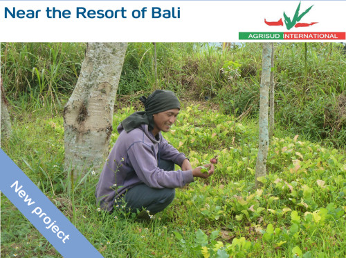 Secure access to water for farming families in Bali - 6 rainwater collection systems