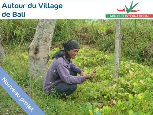Sécuriser l'accès à l'eau pour les familles maraîchères à Bali - 6 impluviums
