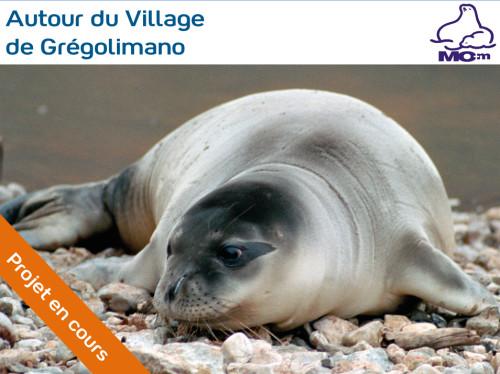 Protection du phoque-moine en Grèce