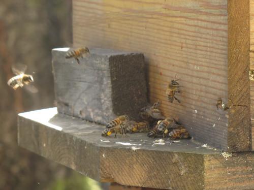 Soutenir une apicultrice en installation, produire du miel local