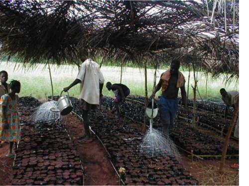 Suivi-évaluation de 3 projets d'agroforesterie de Kinomé