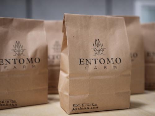 Entomo Farm, l'insecte nourriture du futur