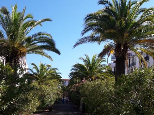 Pour la survie des palmiers