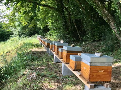 Un rucher pour un collège