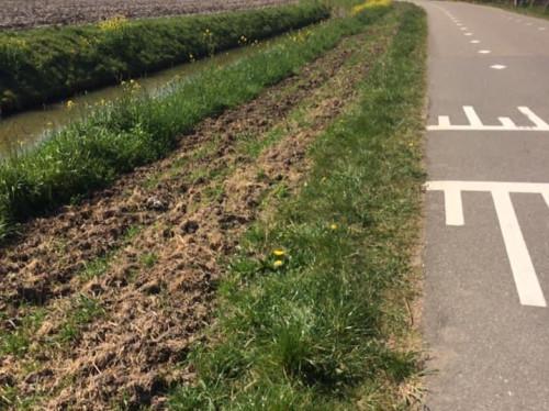 Bloemrijk Beusichem-Zoelmond