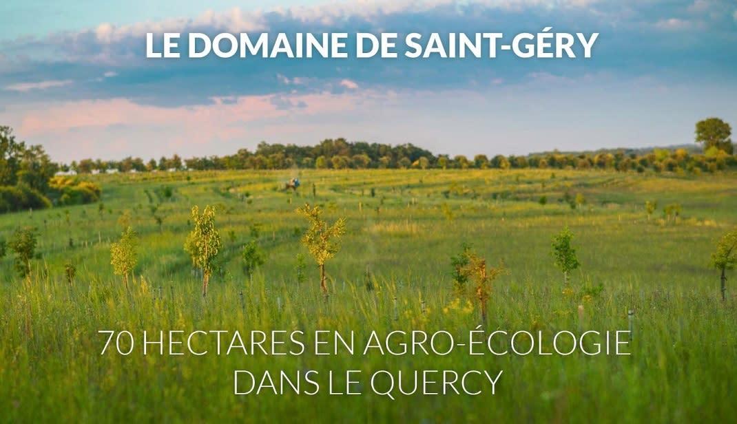vignes en agro-écologie