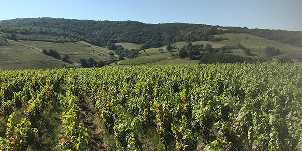 vigne vallée