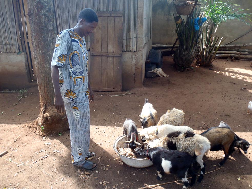 Etude d'impact sur le microcrédit animal au Togo et Bénin