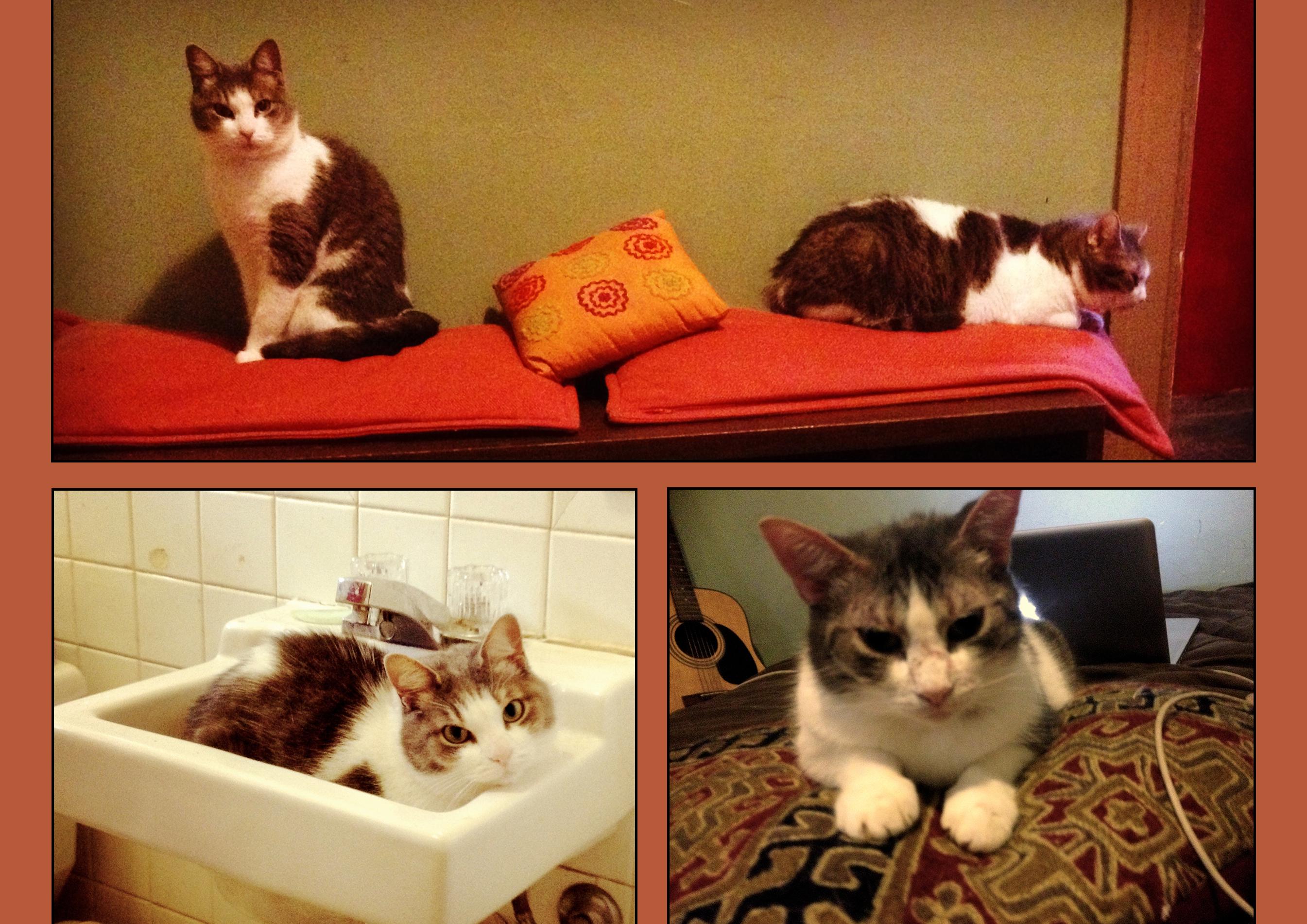 Besoin d'aide pour sauver mes deux chats :) K7xrhioeuxn07af2ju7j