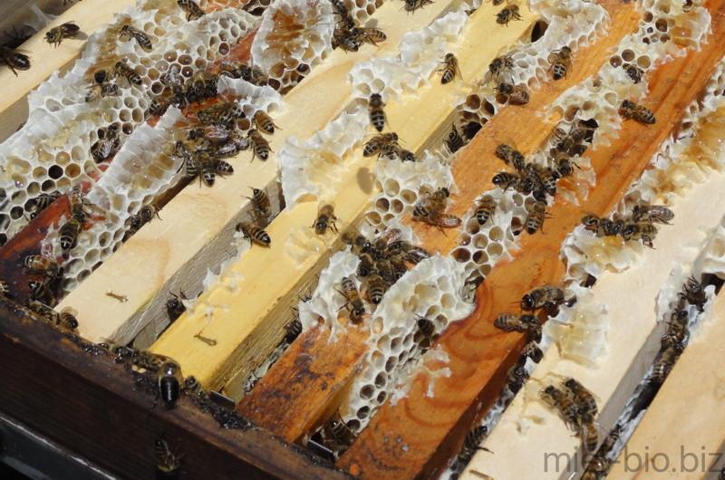 250 essaims d'abeilles pour remonter notre ferme