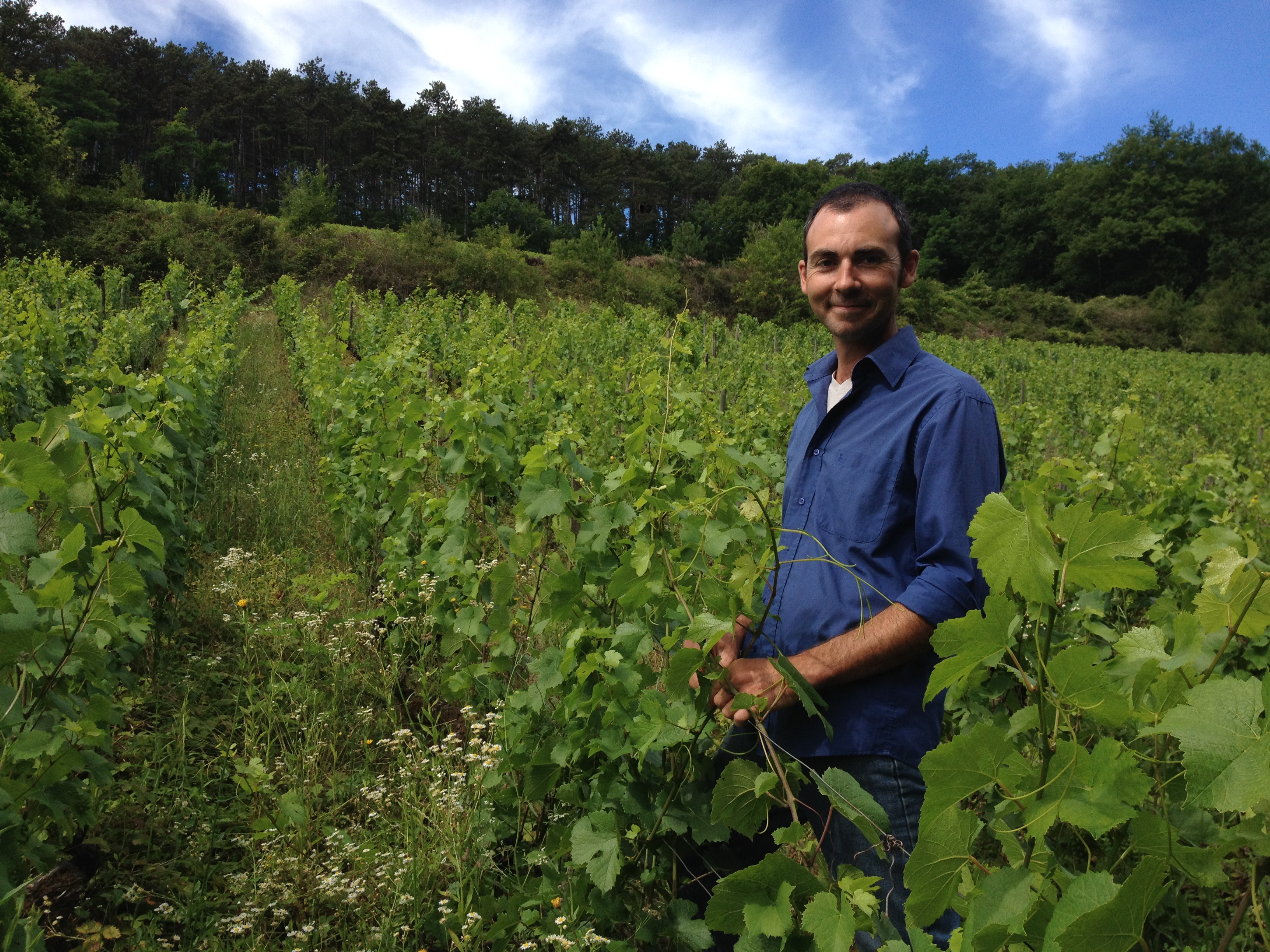 Planting of vines with Biodynamics technics in Hautes Côtes de Beaune
