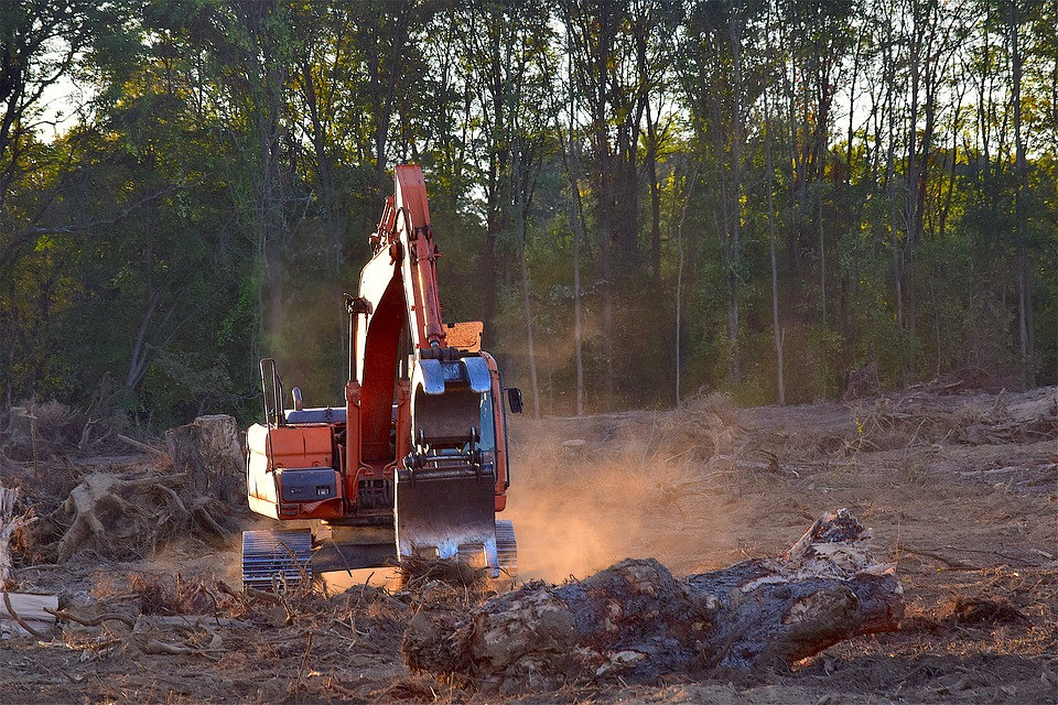 La déforestation : symbole de l'urgence climatique