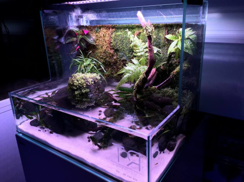 Un aquarium pour les enfants malades du CHPF