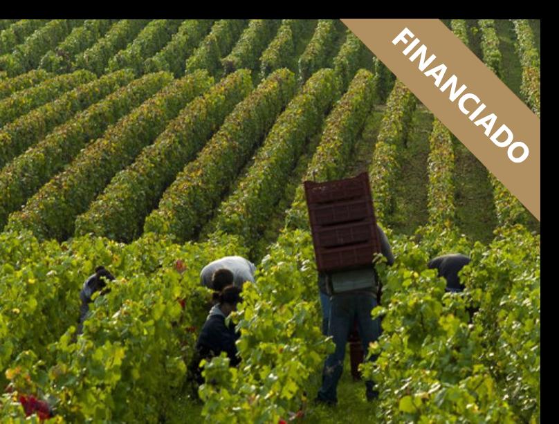 Domaine Les Mille Vignes