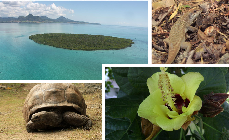 Mauritian Wildlife Foundation