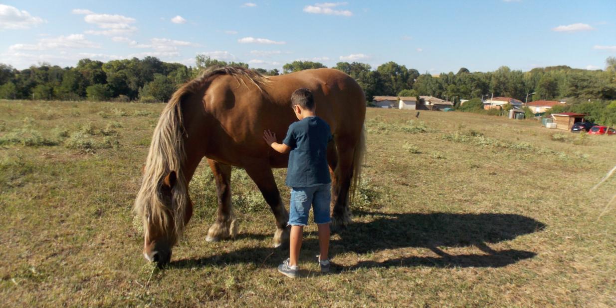 Des chevaux pour des relations écologiques