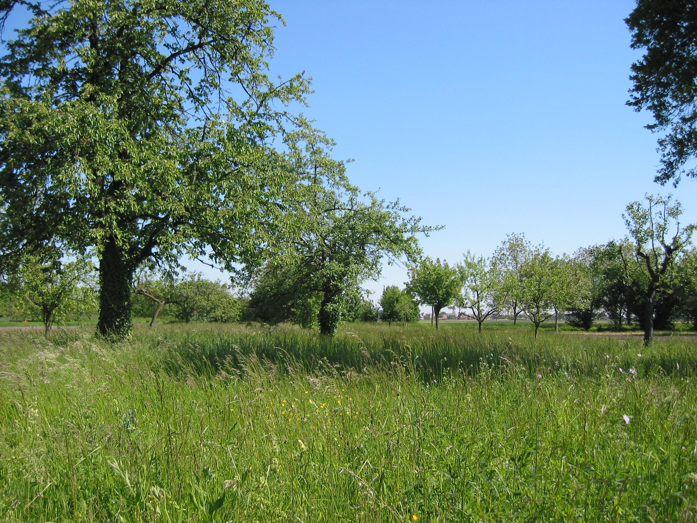 Plantation d'un verger pour la biodiversité