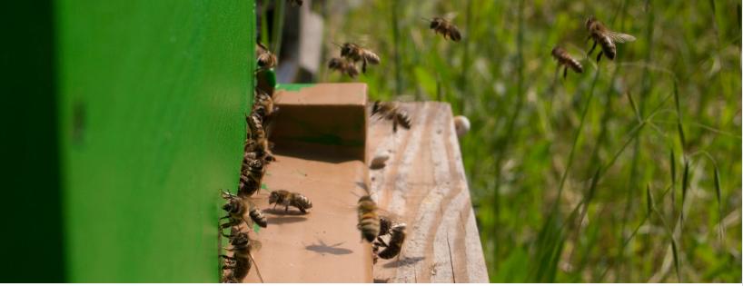Environnement/Biodiversité - Installation d'un rucher pédagogique connecté