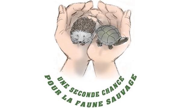 Centre de soins pour animaux sauvages dans l'Indre - Faune 36