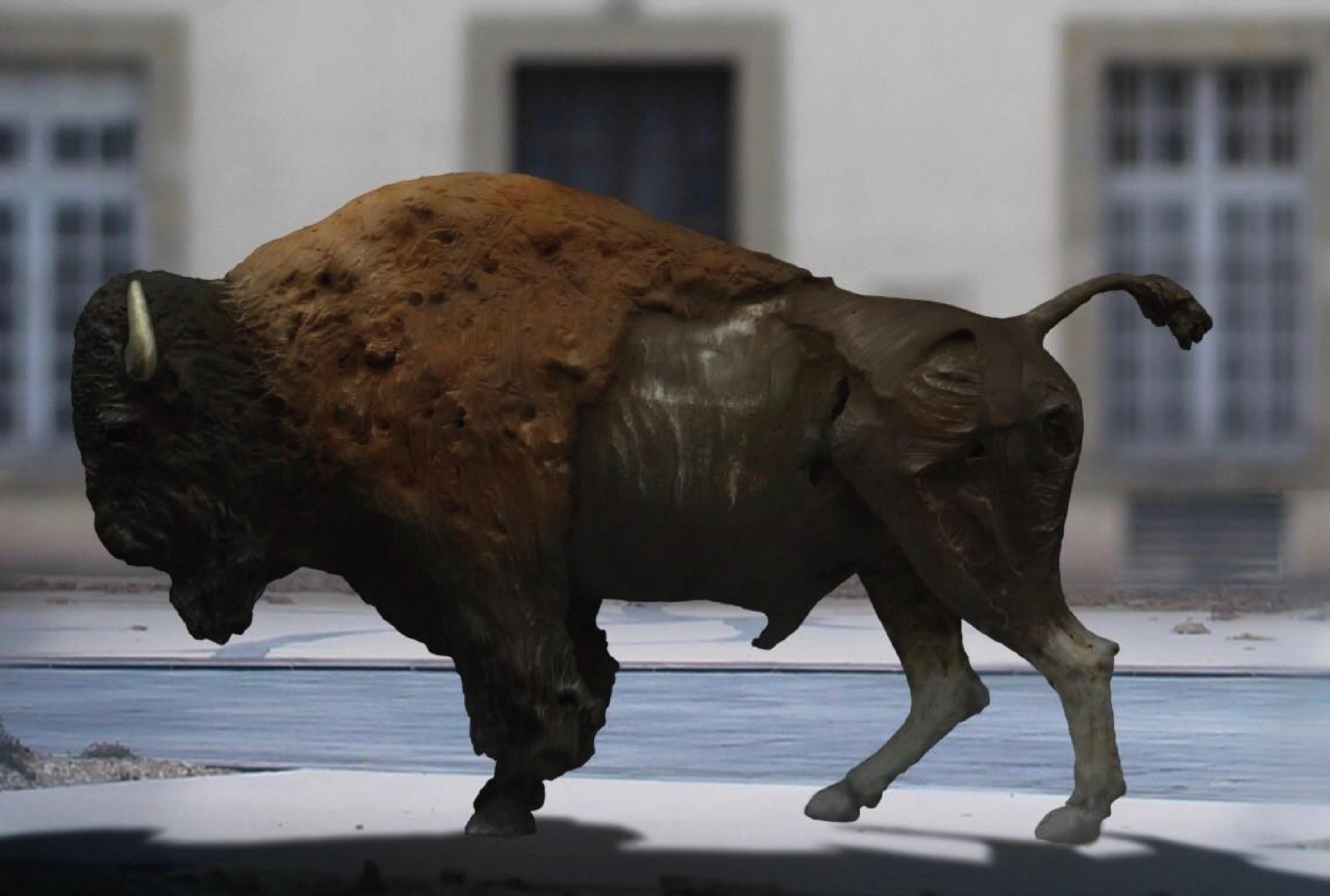 Un bison pour Brive