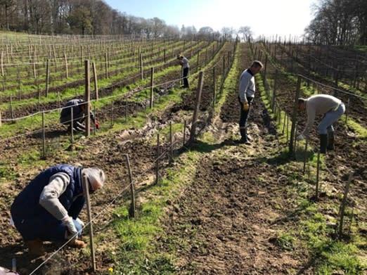 Entretien des vignes du Clos Ferout