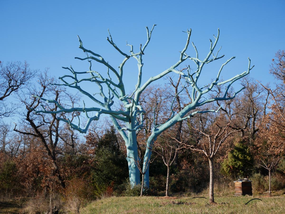 Arbre chêne bleu